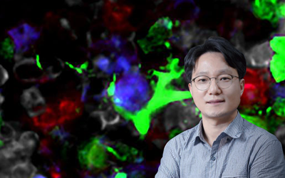 The 'Signal Cell' relaying microbiota signals discovered.